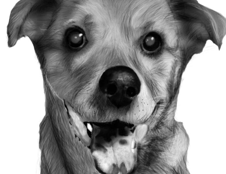 Realistic Pet Portraits, Human Portraits, and Caricatures